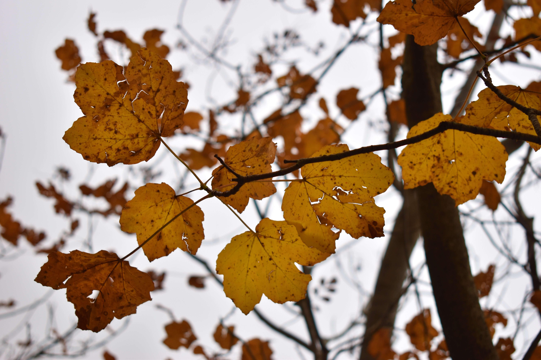 Si sta come d'autunno sugli alberi le foglie. Novembre 2020